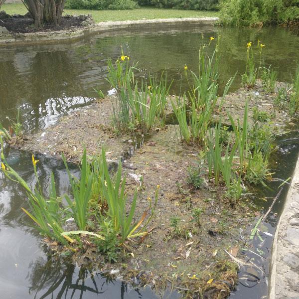 Proyecto de mejora paisajística y ecológica de los estanques del parque de La Taconera, mediante técnicas de Bioingeniería.